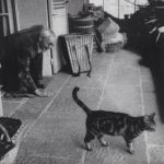 Hermann Hesse and cat