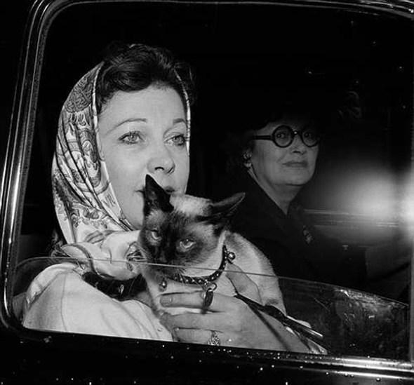 Vivien Leigh with Siamese cat, Armando