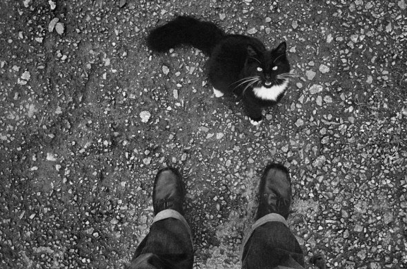 Josef Koudelka Cat, GREAT BRITAIN, England