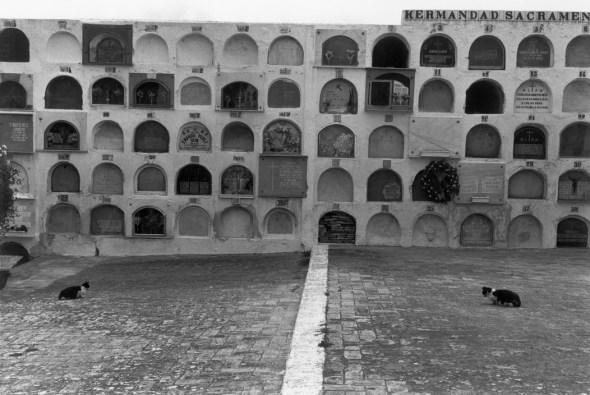 Josef Koudelka 1978 Spain, Cat in foreground