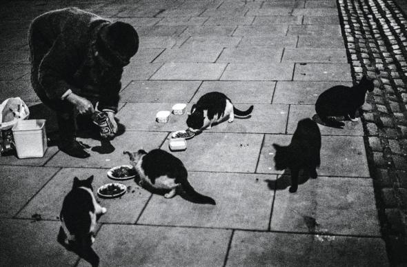 Miss Wyatt who had been feeding cats in Fitzroy Square since 1953, taken in 1978 from Jane Bown