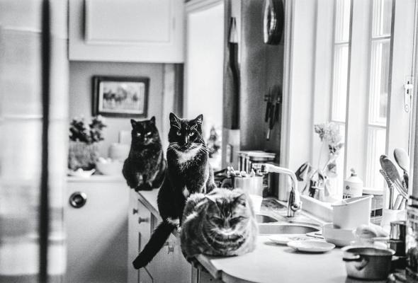 Tombola, Tom Gosling and Tammy, Hampshire, 1985, Jane Bown