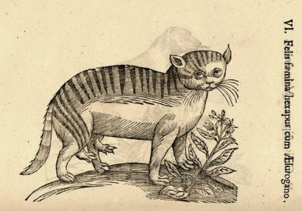 Ulisse Aldrovandi, Cat with Two Extra Legs, 16th Century