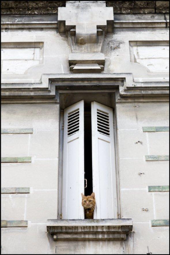 Richard Kalvar, Cat behind the shutters, 2013