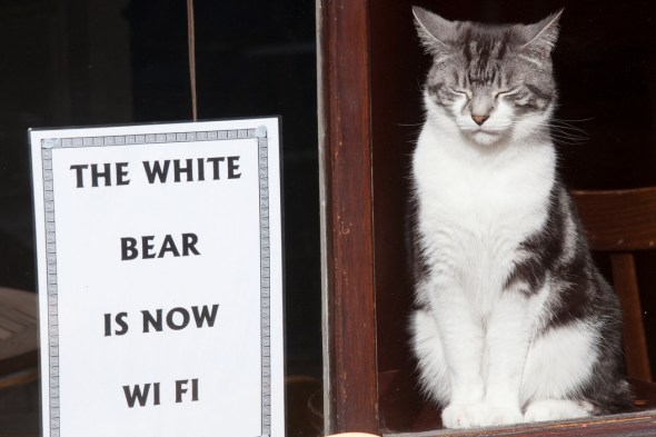 The White Bear Pub on St. John Street, with a Closed-Eyed Cat, London, 2009 Richard Kalvar