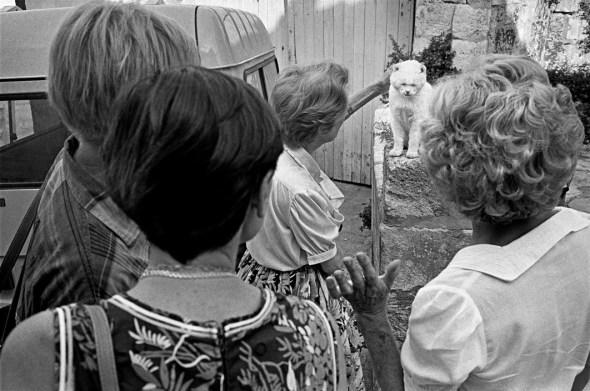 Richard Kalvar, Women Amazed by an Earless Cat