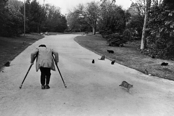 Old Man on Crutches in a Park, with Cats, Spain, 1966 Richard Kalvar