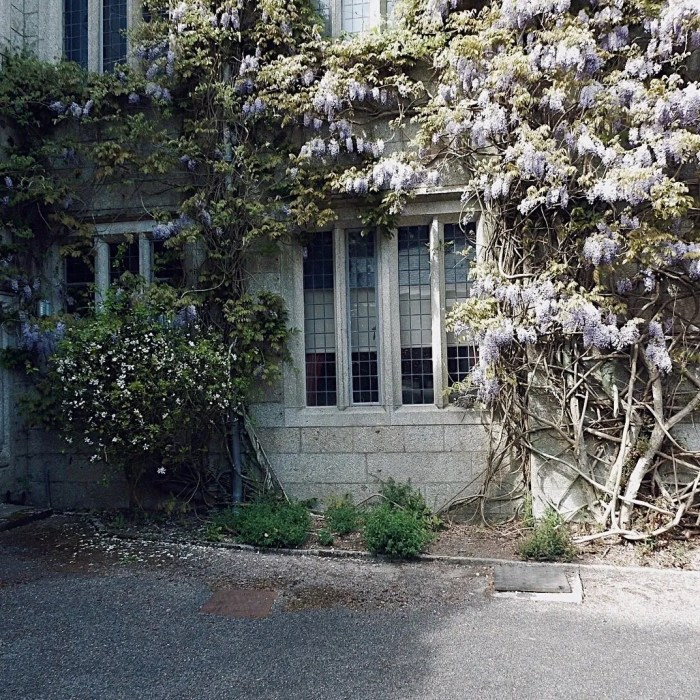Window surrounded by Wisteria