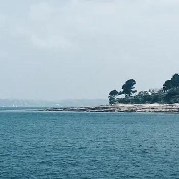Trees on coast next to sea