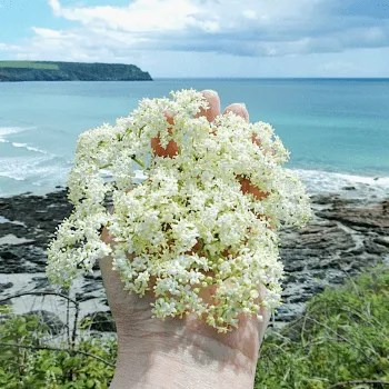 Hand holding elderflower by the sea