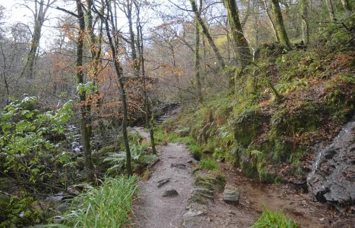 The woodland walk at Kennall Vale