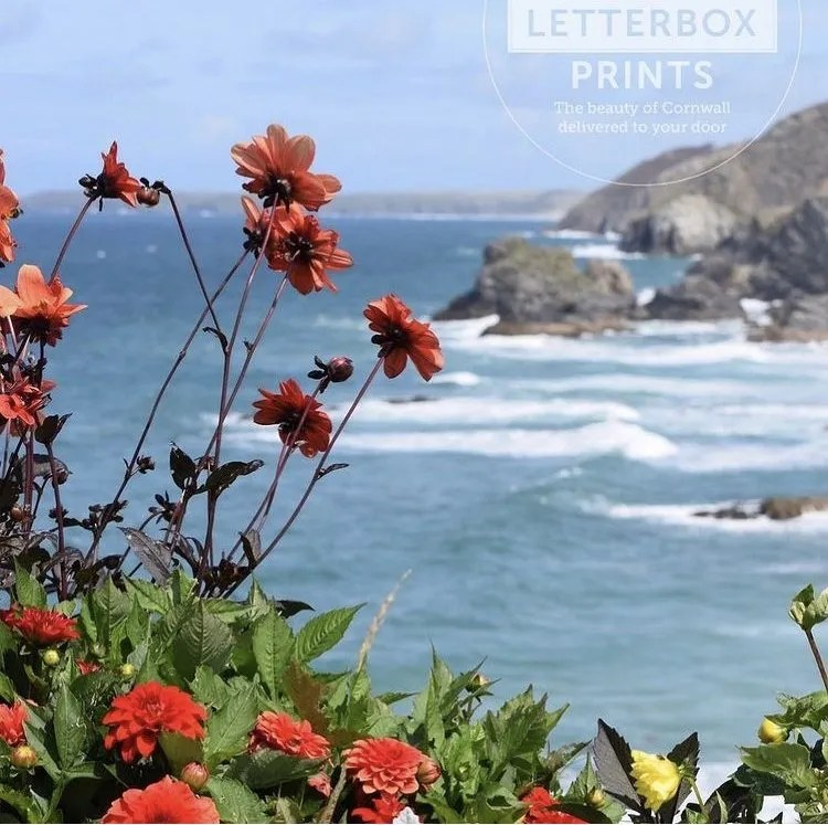 Red flowers with the sea and cliffs in Cornwall