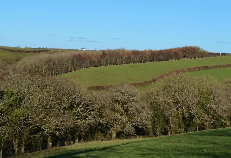 Fields and trees in sunshine