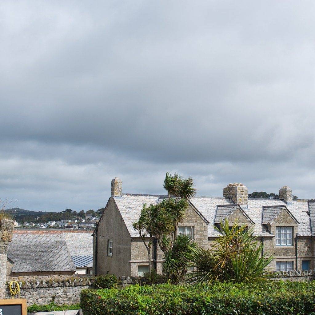a row of houses and Cornish palms and rooftops