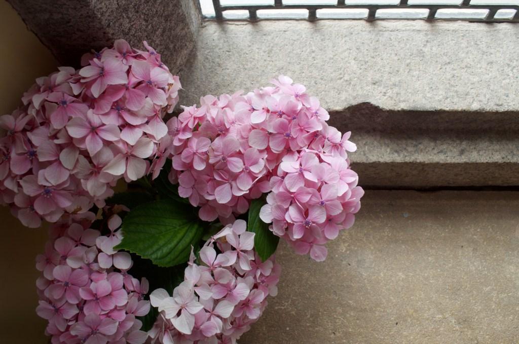 pink hydrangeas on a window ledge in a castle