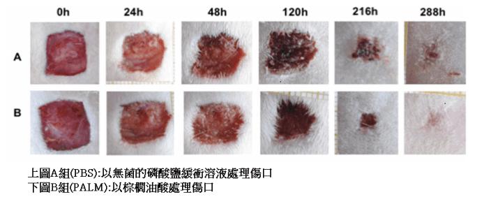 沙棘油對皮膚的好處