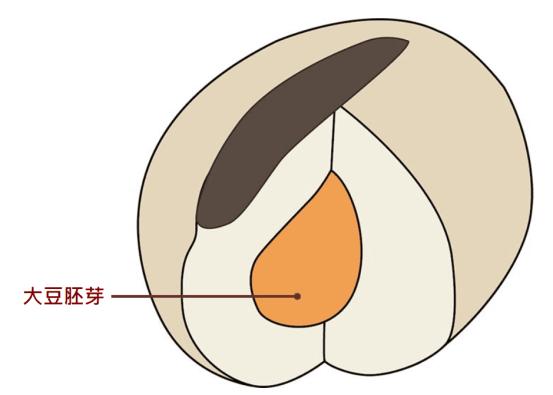 大豆胚芽異黃酮
