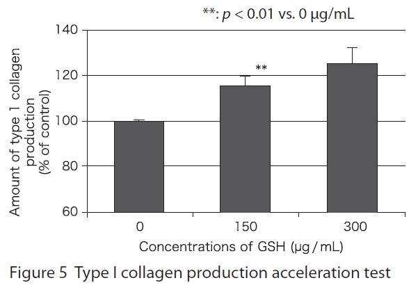 穀胱甘肽促進膠原蛋白生成