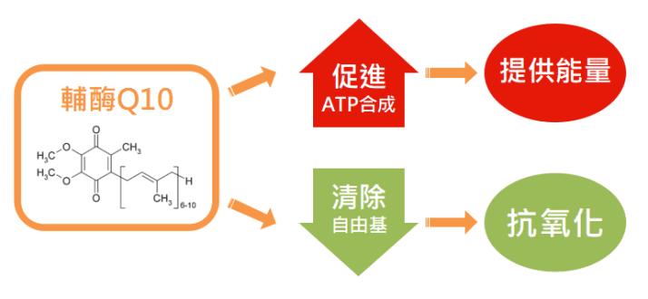 輔酶Q10功效:能量合成、抗氧化