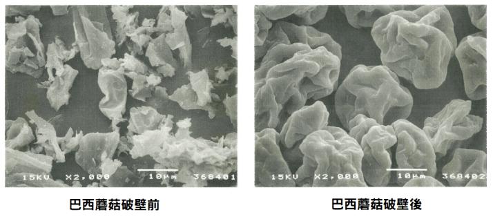 巴西蘑菇推薦品牌:日本食菌工業破壁巴西蘑菇