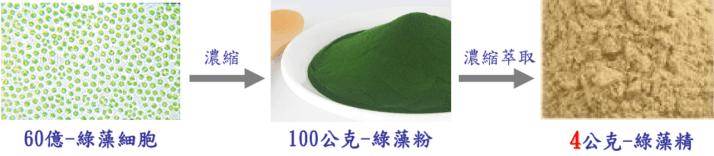 綠藻精和綠藻差別在哪裡?