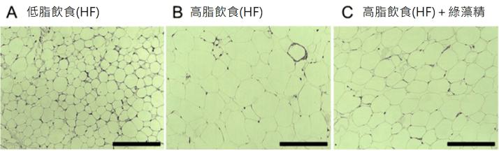 綠藻精功效5:降血脂