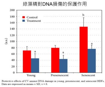 綠藻精功效2:預防DNA損傷