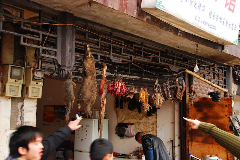 Bats, such as those sold in this Chinese market, are a possible source of the COVID-19 outbreak. (Simon Law / CC BY-SA (https://creativecommons.org/licenses/by-sa/2.0))