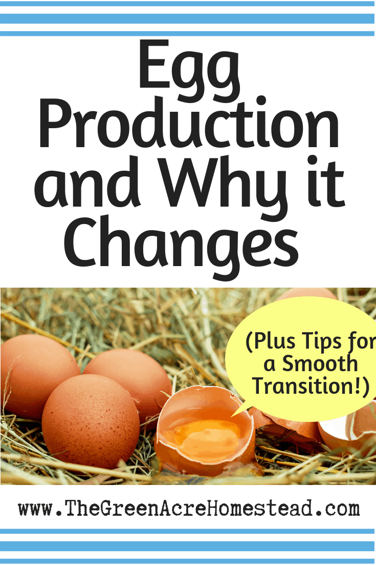 Egg Production and Why it Changes (Plus Tips for a Smooth Transition!)