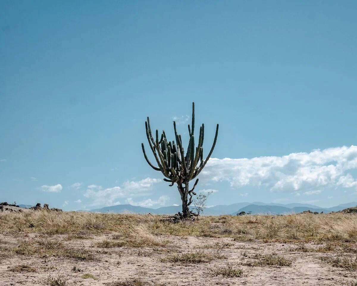 Cactus against blue sky in the Tatacoa Desert