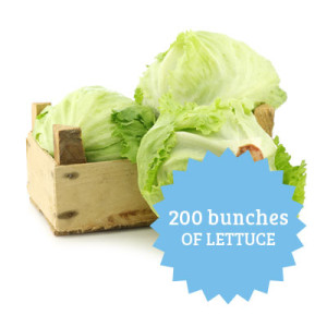 200 bunches of lettuce