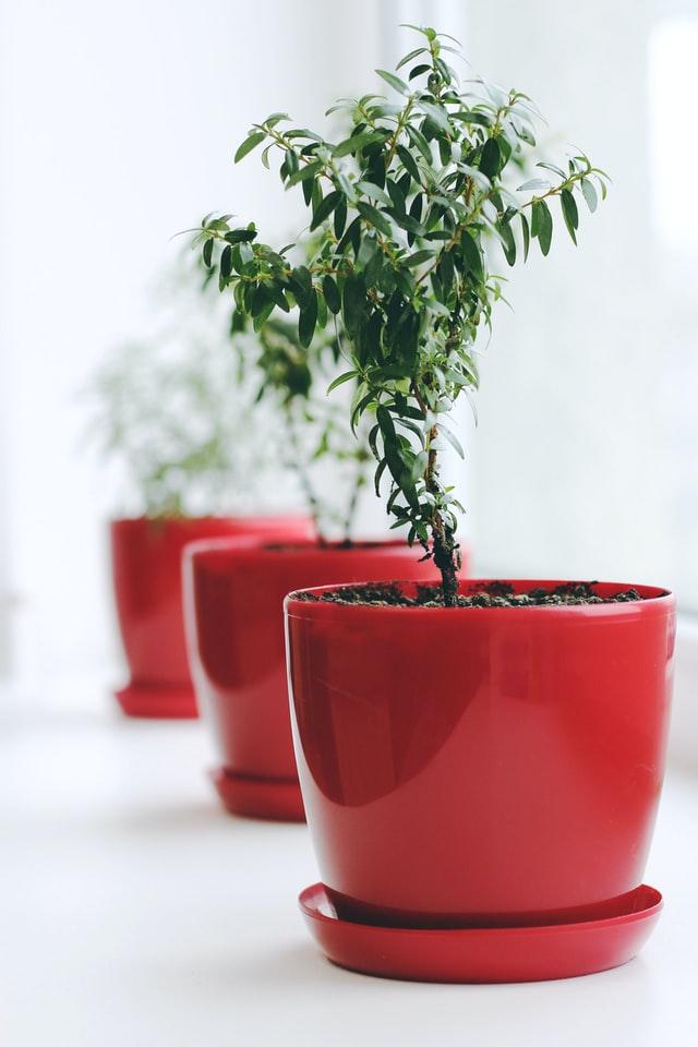 beautiful planters, preparing and setup