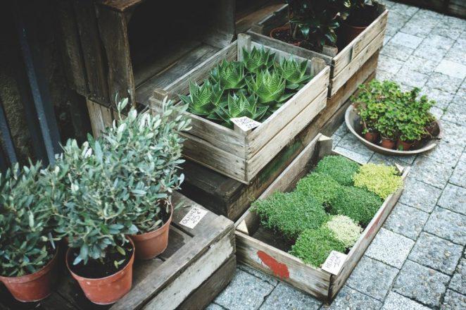 10 Gardening Tips For Newbies