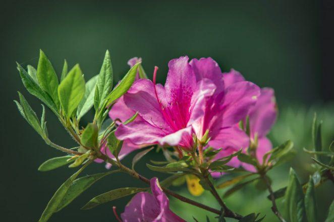 9 great shrubs for garden