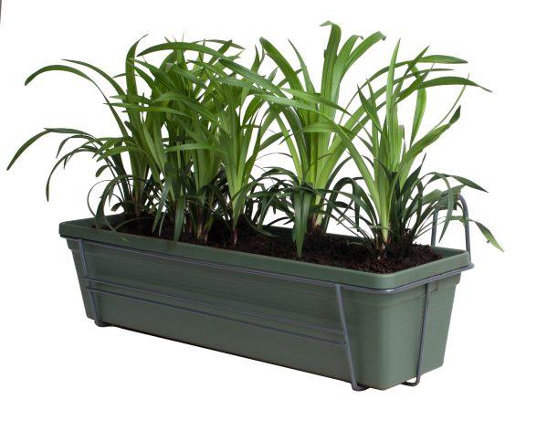 Leliegras in ELHO Green Basics balkonbak (Bladgroen)
