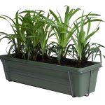 ELHO Green Basics Bladgroen