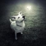 Fotógrafo usa arte surrealista para ajudar animais abandonados a encontrar lar