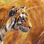 Em 40 anos, Terra perdeu mais da metade dos seus animais selvagens