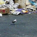 10 cidades brasileiras que multam quem joga lixo na rua