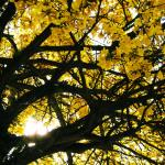Cidade de MG planta uma árvore a mais no município a cada bebê nascido