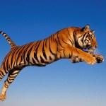 6 importantes causas animais para defender em 2015