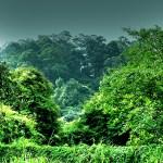Conheça a BitSeeds, moeda virtual que promete plantar UM BILHÃO de novas árvores no mundo