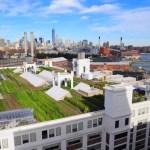 Conheça a maior horta urbana já construída no topo de um prédio