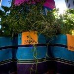 Coletivo espalha mudas de temperos pelos postes de São Paulo