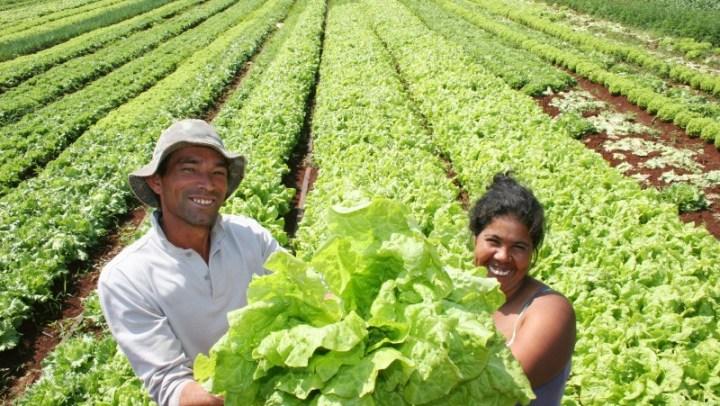 ONU oferece curso online GRATUITO sobre agricultura familiar responsável (inspirado em metodologia brasileira)