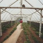 Por que a agroecologia vai substituir de vez a agricultura convencional?