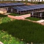 Detroit quer ter maior fazenda urbana do mundo: serão 22 quarteirões de horta no meio da cidade!