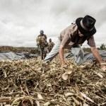 Brasil permite consumo de 14 agrotóxicos proibidos mundialmente