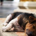 """Rússia está exterminando animais de rua para """"fazer bonito"""" na Copa do Mundo"""