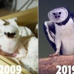 Programa de reprodução animal completa 10 anos e comemora sucesso